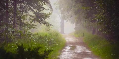 la_pioggia-nel-pineto
