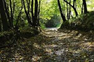 la_strada_nel_bosco_Kipling